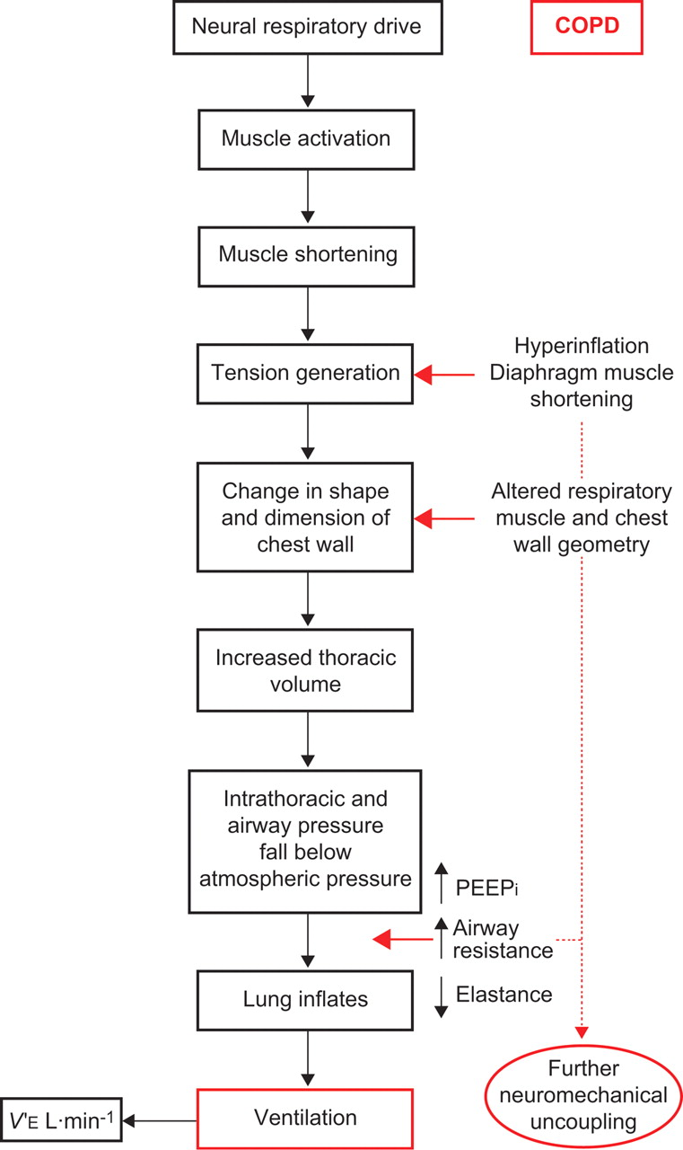 a physiological model of patient