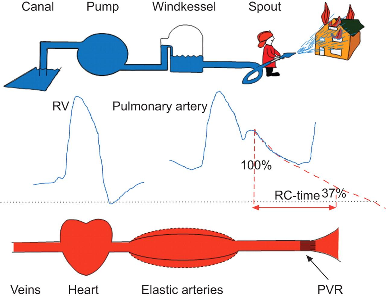 pdf Plasma Fractionation and Blood