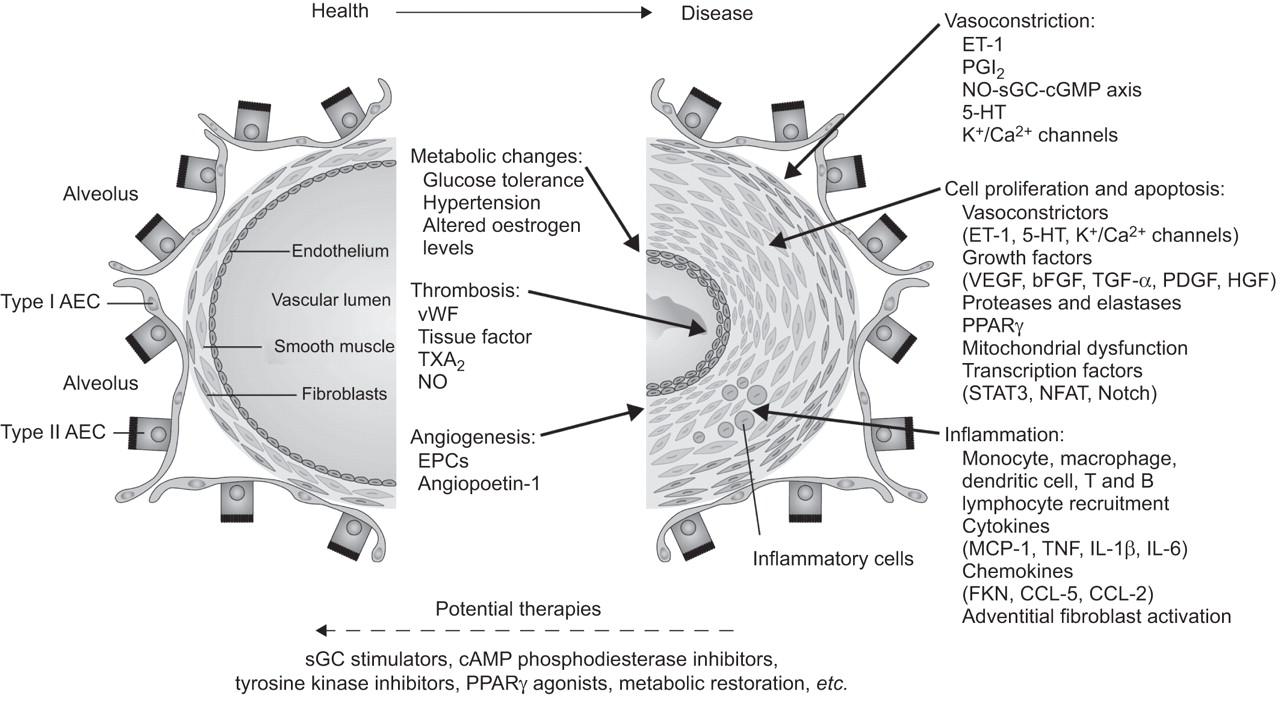 dendrites and estrogens