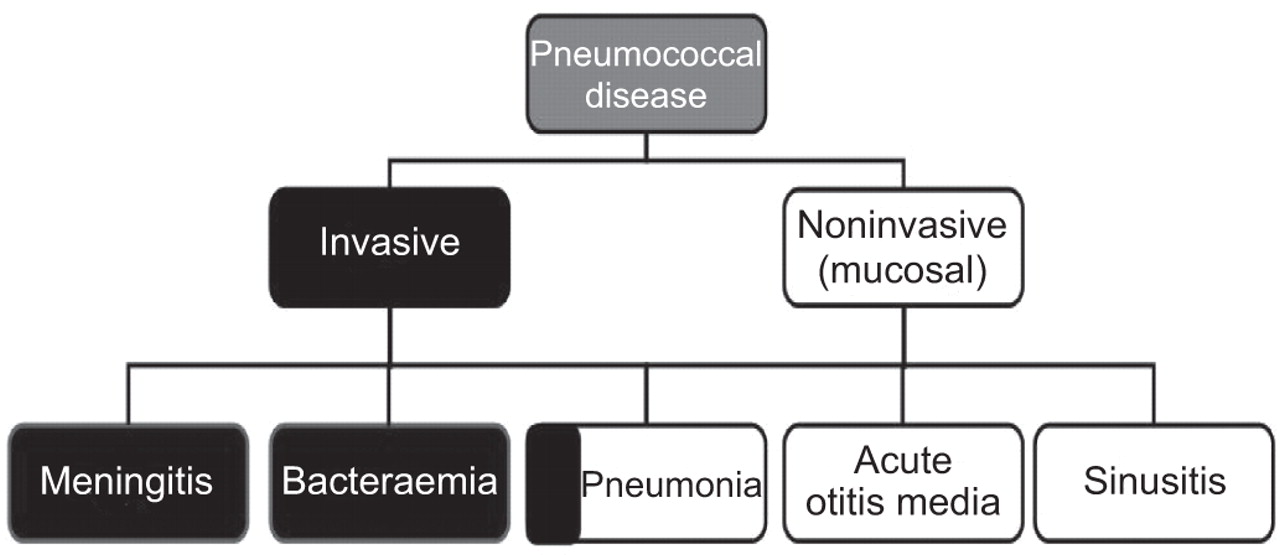 Strep pneumonia in older adults images 709