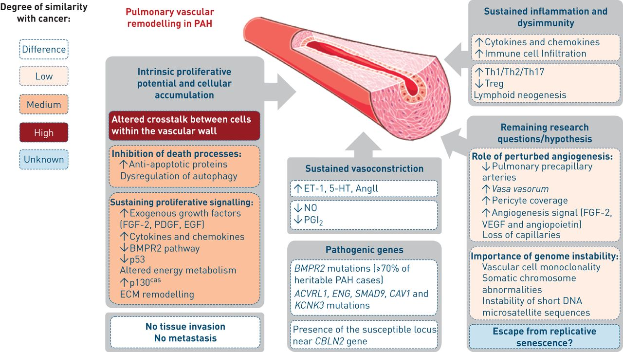 Pathogenesis Of Pulmonary Arterial Hypertension Lessons