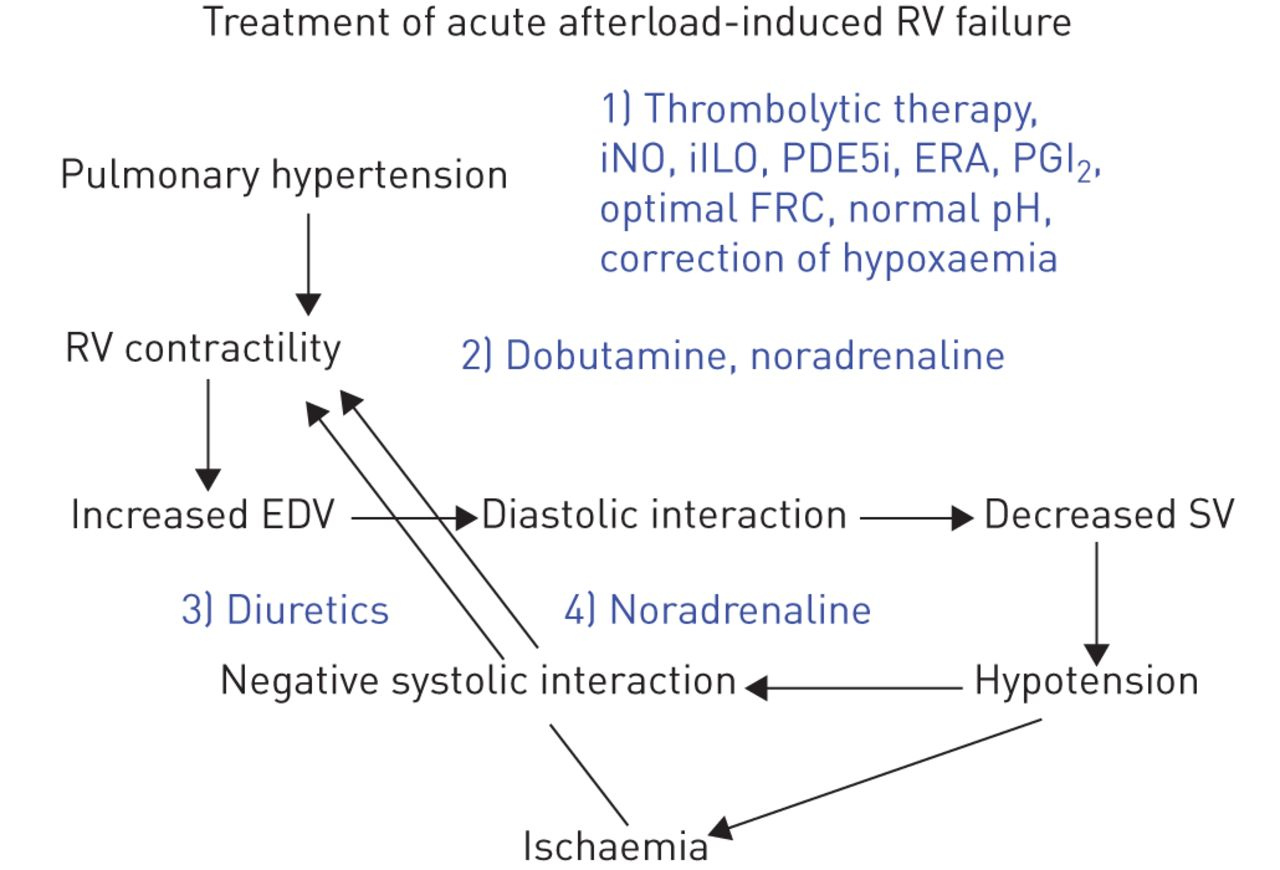 The Right Ventricle In Pulmonary Arterial Hypertension European