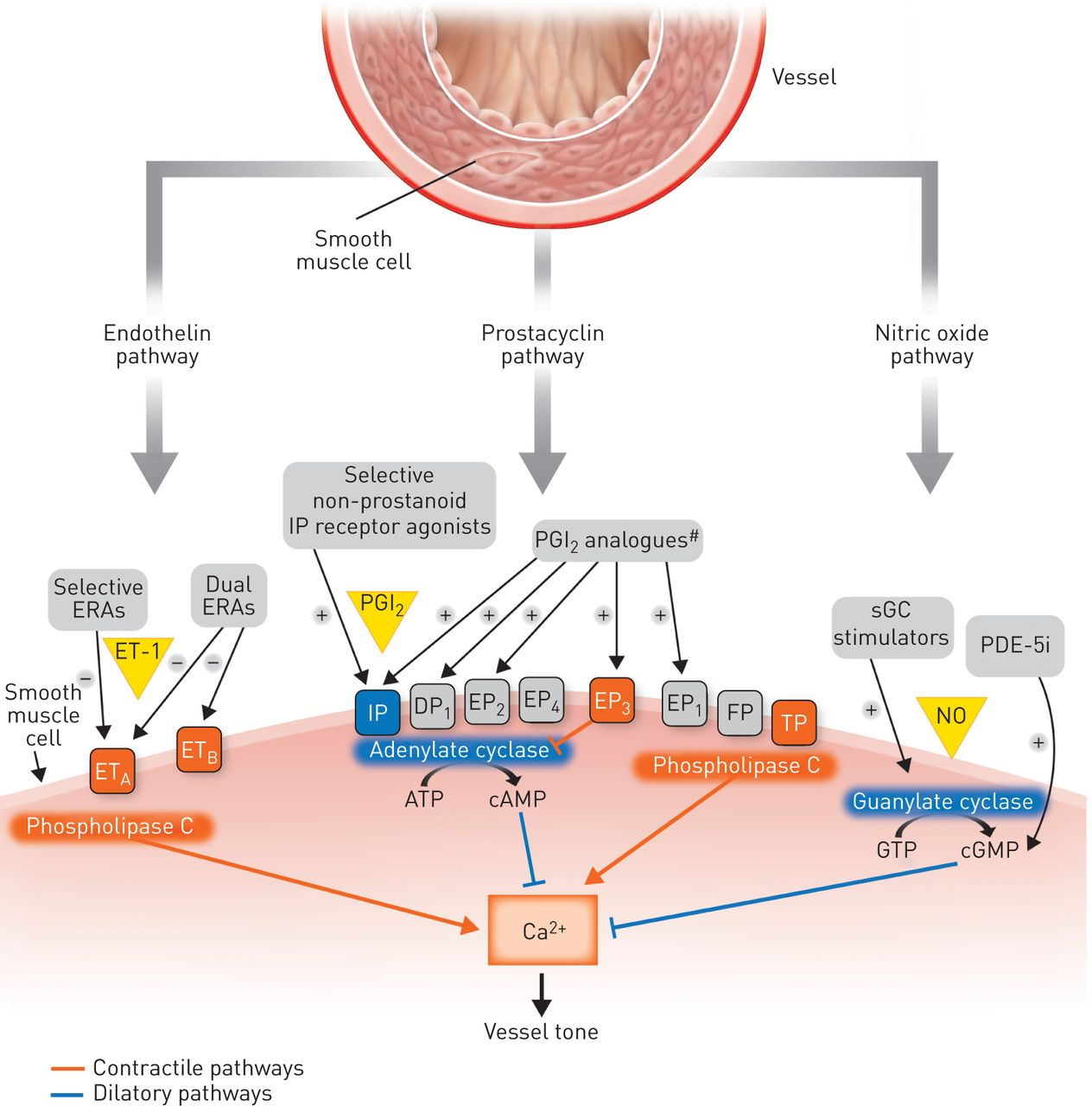 Recent Advances In Targeting The Prostacyclin Pathway In