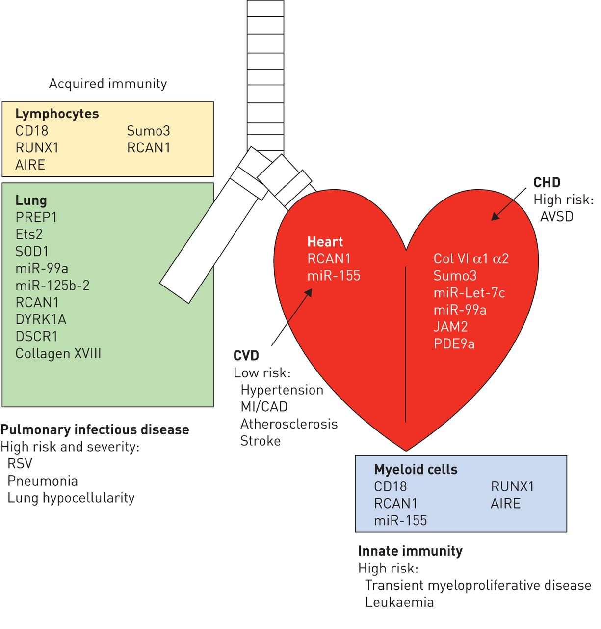 What people with down syndrome can teach us about cardiopulmonary download figure ccuart Images