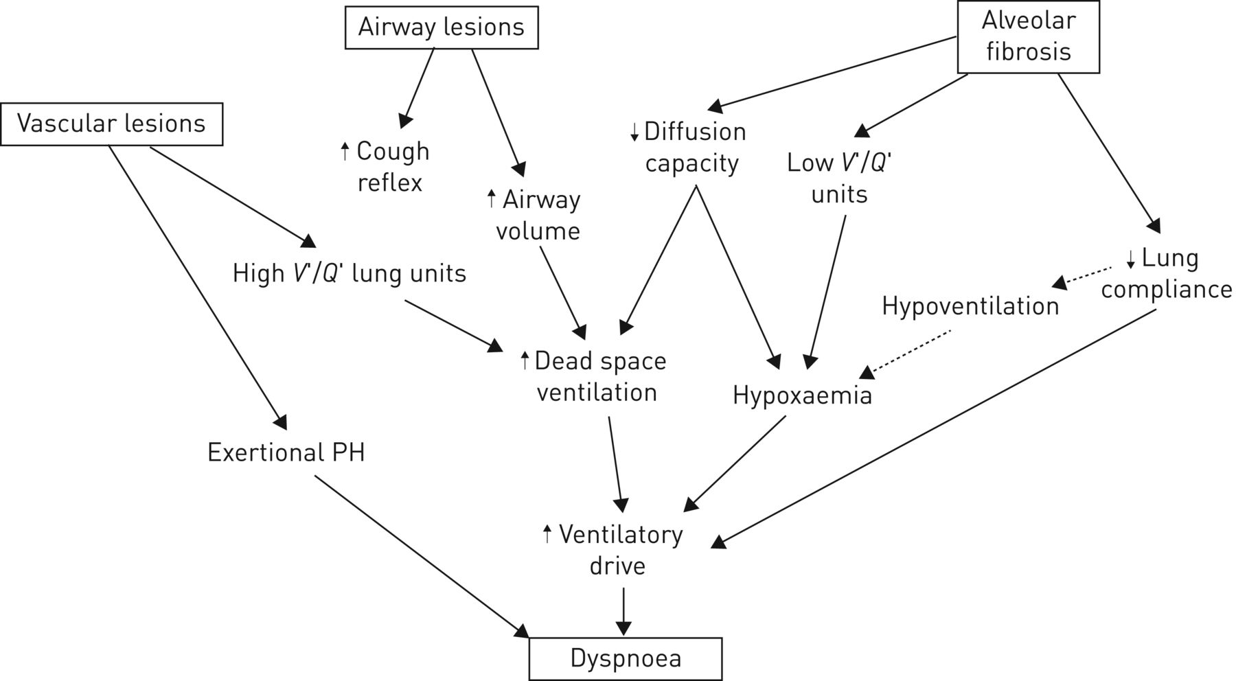 Physiology of the lung in idiopathic pulmonary fibrosis   European
