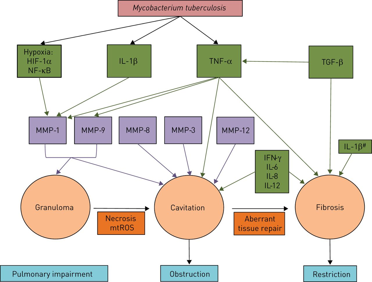 Tuberculosis And Lung Damage From Epidemiology To Pathophysiology
