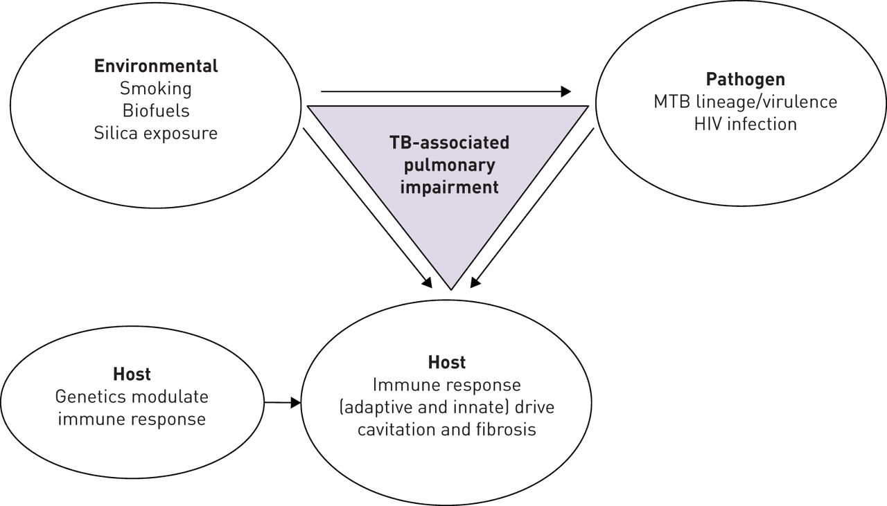 Tuberculosis and lung damage: from epidemiology to pathophysiology