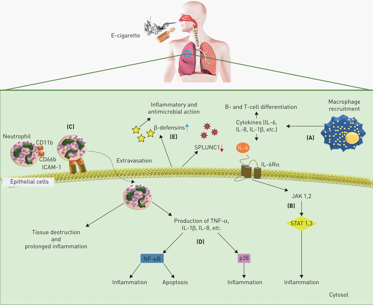 Immunological And Toxicological Risk Assessment Of E Cigarettes Drybatterycelldiagramjpg Download Figure
