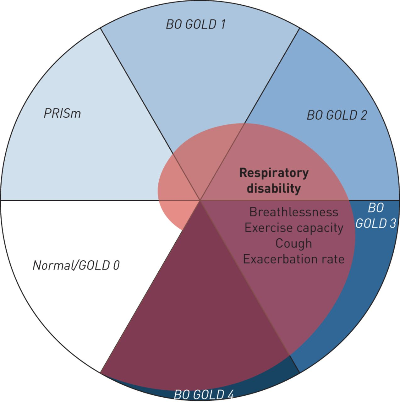 COPD beyond proximal bronchial obstruction: phenotyping and related